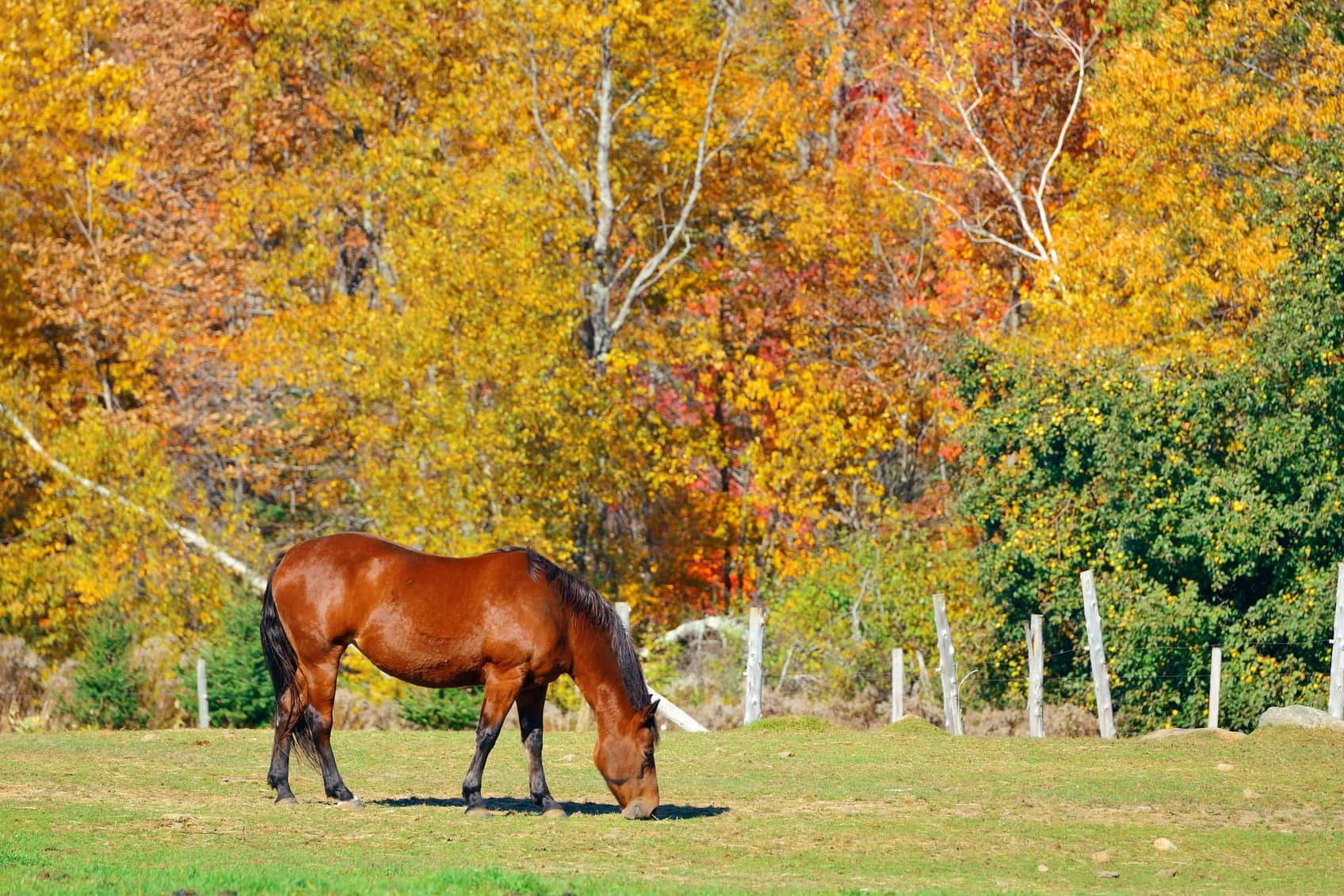 Pre-travel Checklist for your Horse Trailer