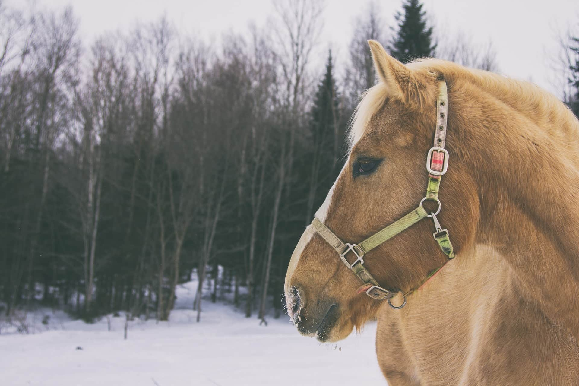 Preparing for Winter Horse Care