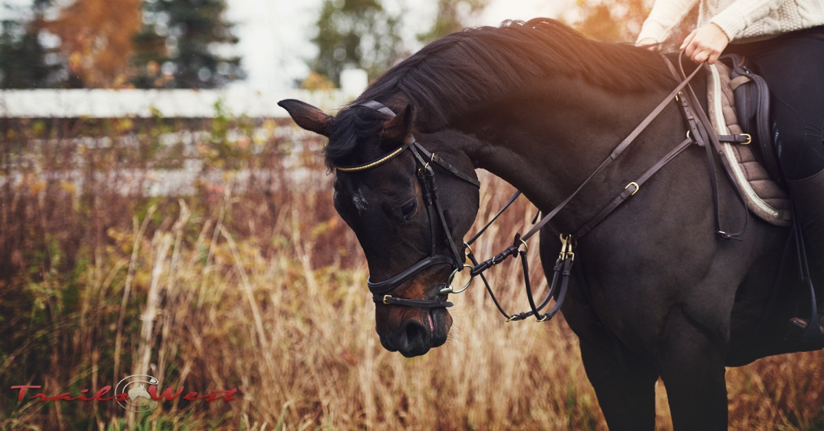Get on Track with Choosing the Right Tack