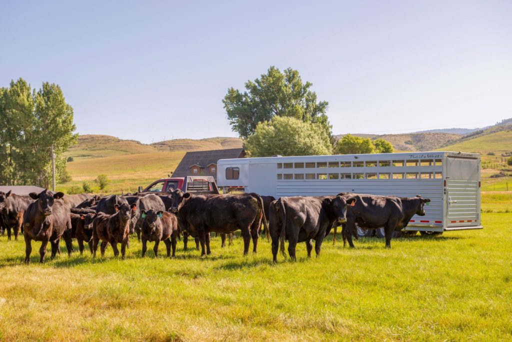 How to Keep Your Horse or Livestock Trailer Clean