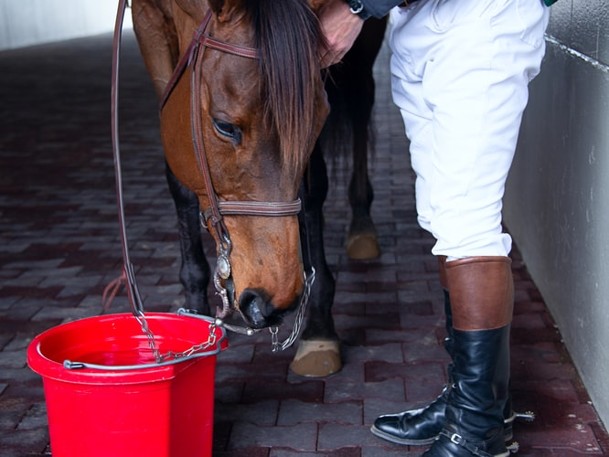 brown-horse-investigating-red-water-bucket-while-rider-stands-next-to-it