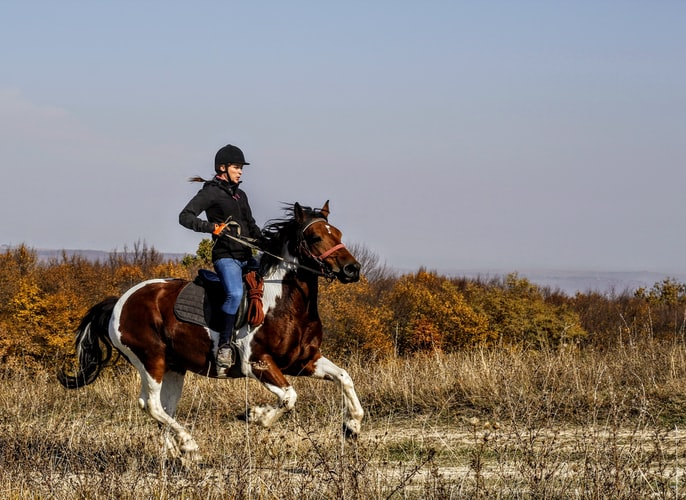 woman-wearing-helmet-and-black-jacket-riding-galloping-brown-and-white-horse-in-shrubland