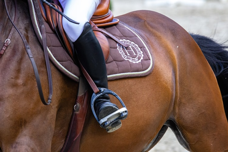 Horse with rider sitting in English saddle outdoors during competition