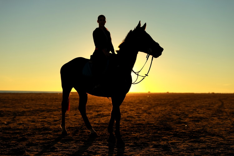 The silhouette of a horse and rider standing outdoors during a sunset.